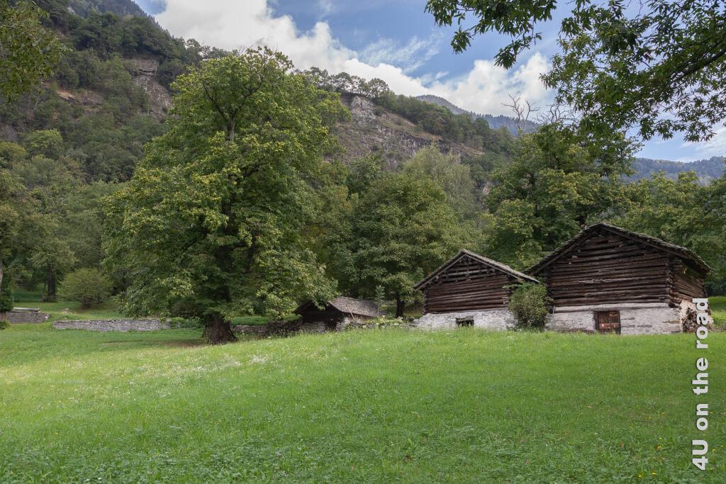 Dörrhäuser umgeben von Kastanienbäumen, Castasegna