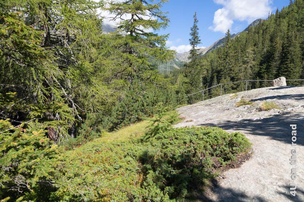 Diesen riesigen Fels hat der Gletscher vom Piz Palü bis hier her nach Cavaglia mitgenommen. - Gletschergarten in Cavaglia