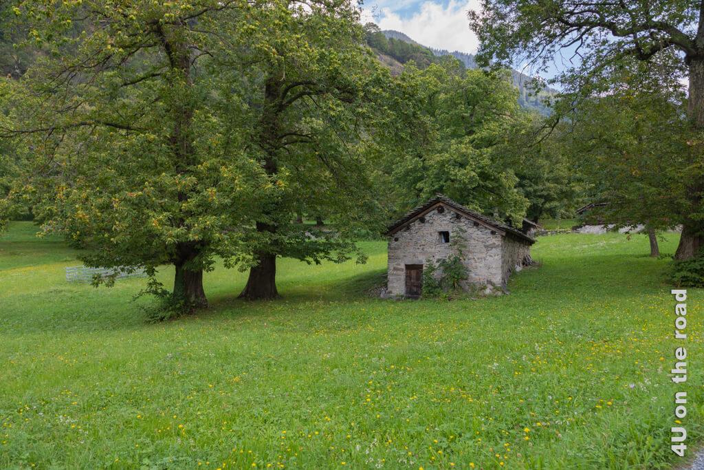 Am oberen Fenster hängt eine Gardine in diesem kleinen Häuschen. Wofür es wohl genutzt wird? Castasegna