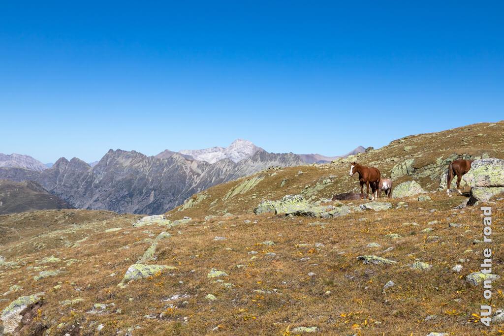 Der Rastplatz der Pferde bietet wirklich eine wunderbare Sicht auf die umliegenden Berge und die konditionell unterschiedlich aufgestellten Wanderer.