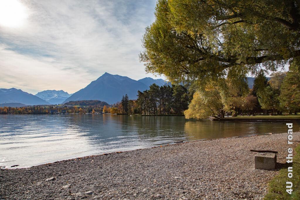 Allein für dieses Seeufer des Thuner Sees lohnt sich ein Wiederkommen auf den Campingplatz Gwatt. Im Sommer ist hier sicher viel los, aber heute geht der Campingplatz in den Winterschlaf und schliesst.