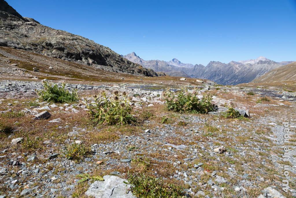 Auf dieser lieblichen Hochebene im Val Champagna mit dem lustig gluckernden Bächlein könnte ich ewig verweilen.