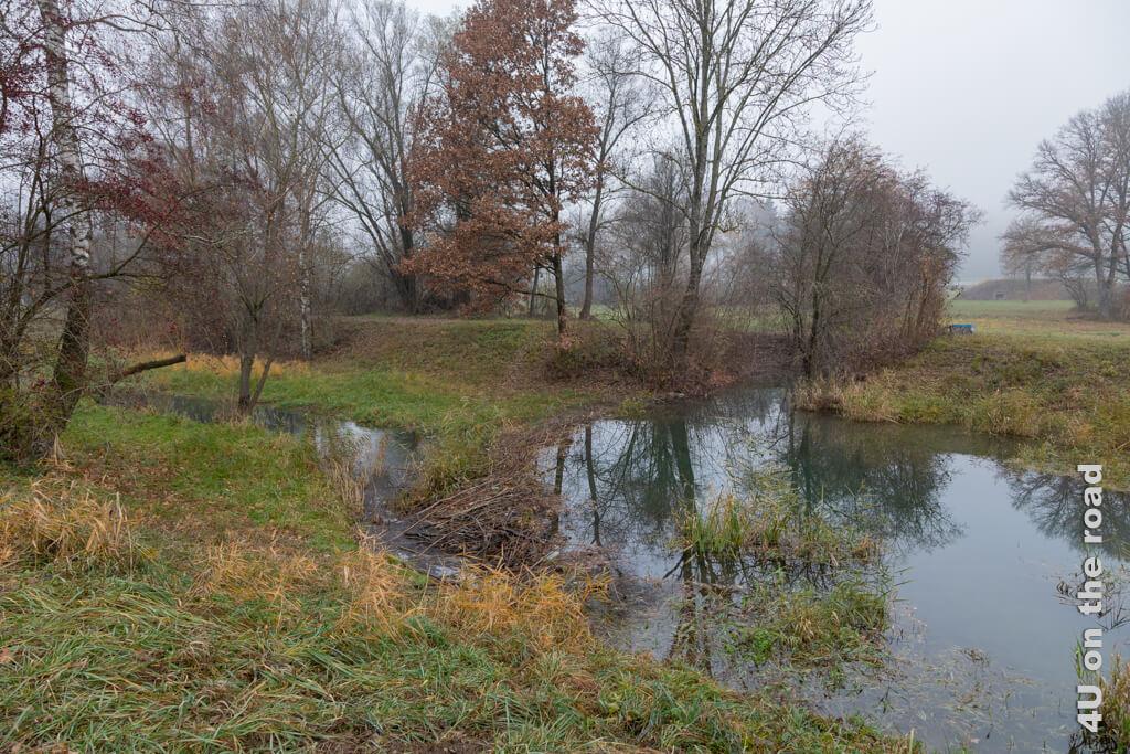 Dank der Baukunst eines Bibers entsteht hier ein kleiner See. - Flughafenrundweg, Flughafen Zürich