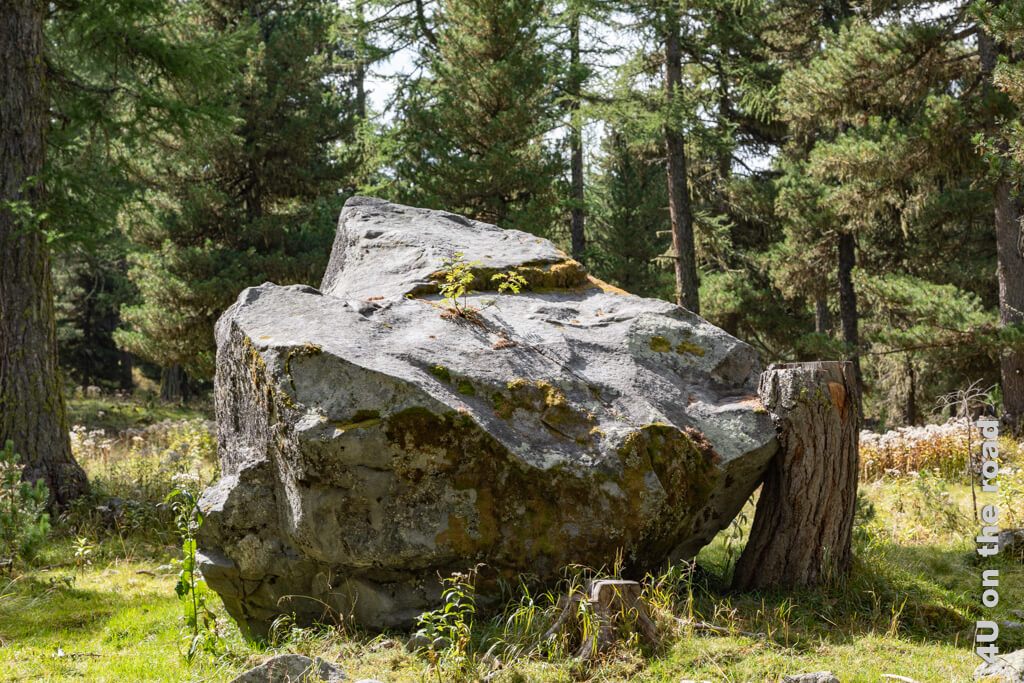Ob der Baum wohl einst den Felsbrocken aufgehalten hat? - Wanderung im Roseg Tal