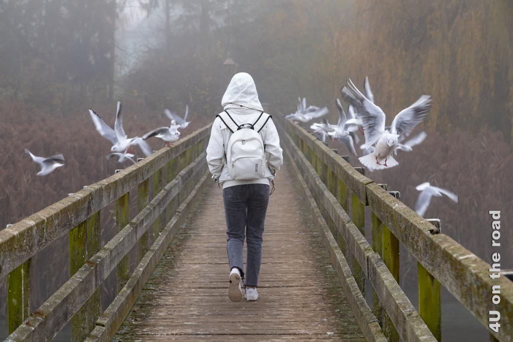 Jetzt flattern die meisten Möven nur kurz auf, um sofort ein Stück hinter der vorbeilaufenden Person wieder zu landen.