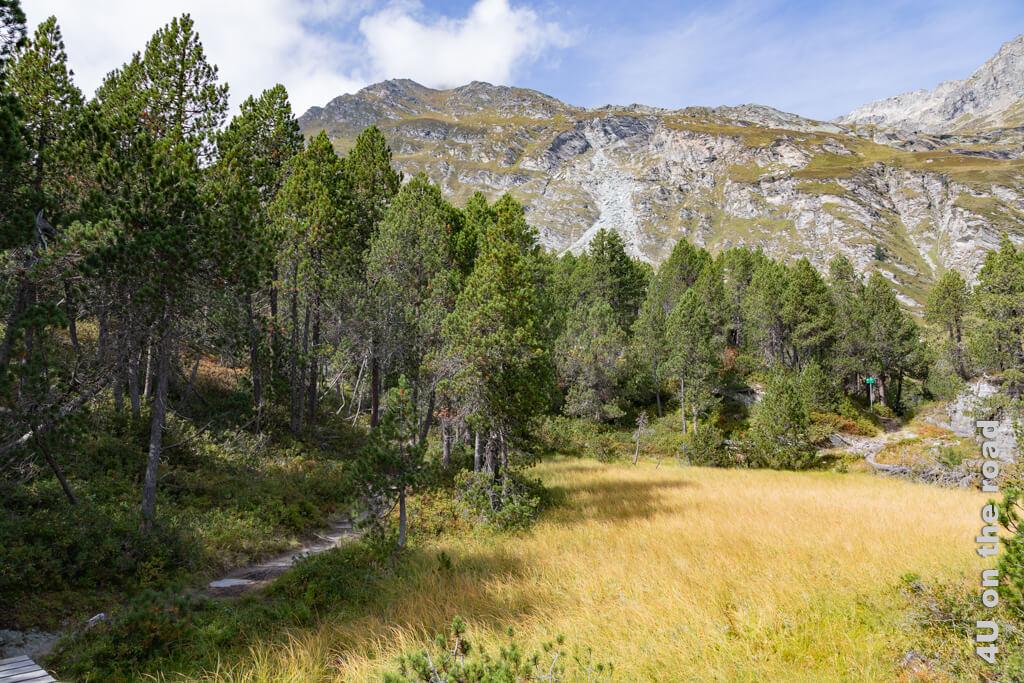 Das Flachmoor, dessen Farbe an reifenden Weizen erinnert.