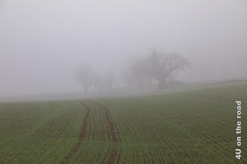 Nebel über den Feldern - Flughafenrundweg