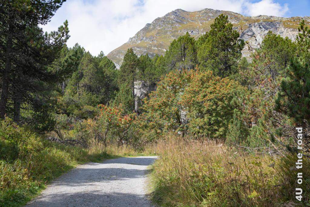 Entlang des Sentiero Segantini kann man im Herbst reife Brombeeren naschen.
