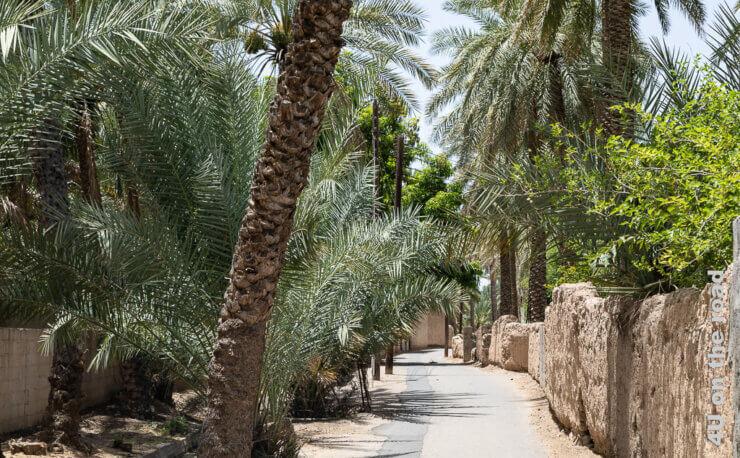 Feature Al Mudayrib