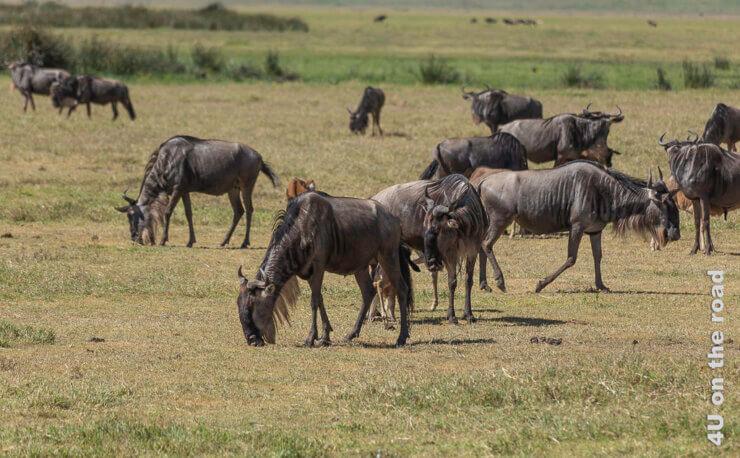 Feature Ngorongoro Krater