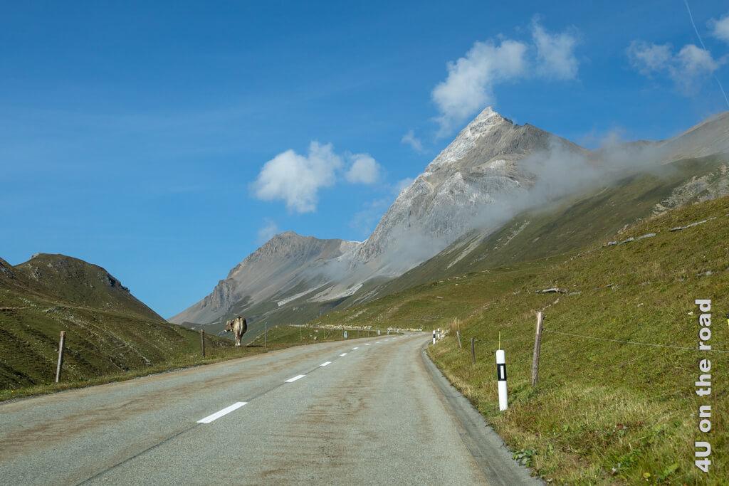 Das volle Schweiz Feeling - blauer Himmel, Berge und eine Kuh - kann man auf der Strasse zum Albulapass geniessen.