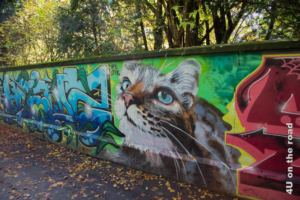Eine Mauer voller Graffiti am Uferweg zur Spitze der Insel in der Aare.
