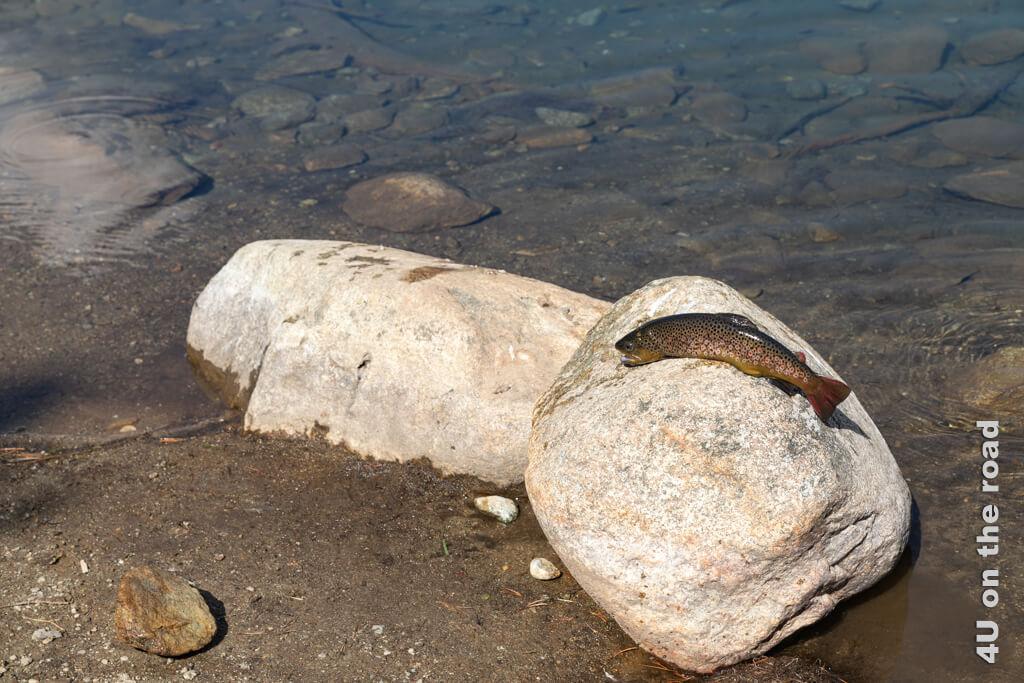 Ein erfolgreicher Angler präsentiert uns stolz seinen Fang aus dem Palpuognasee.