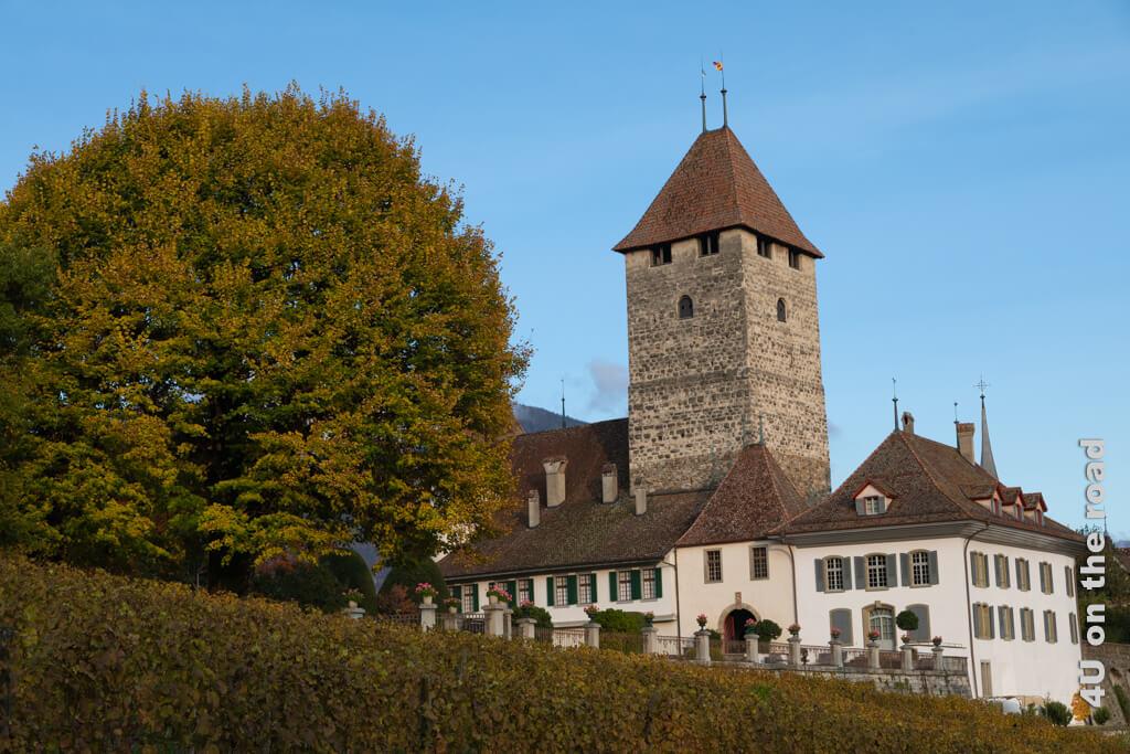 Das Schloss Spiez, dessen älteste Teile aus dem 13. Jhd. stammen.
