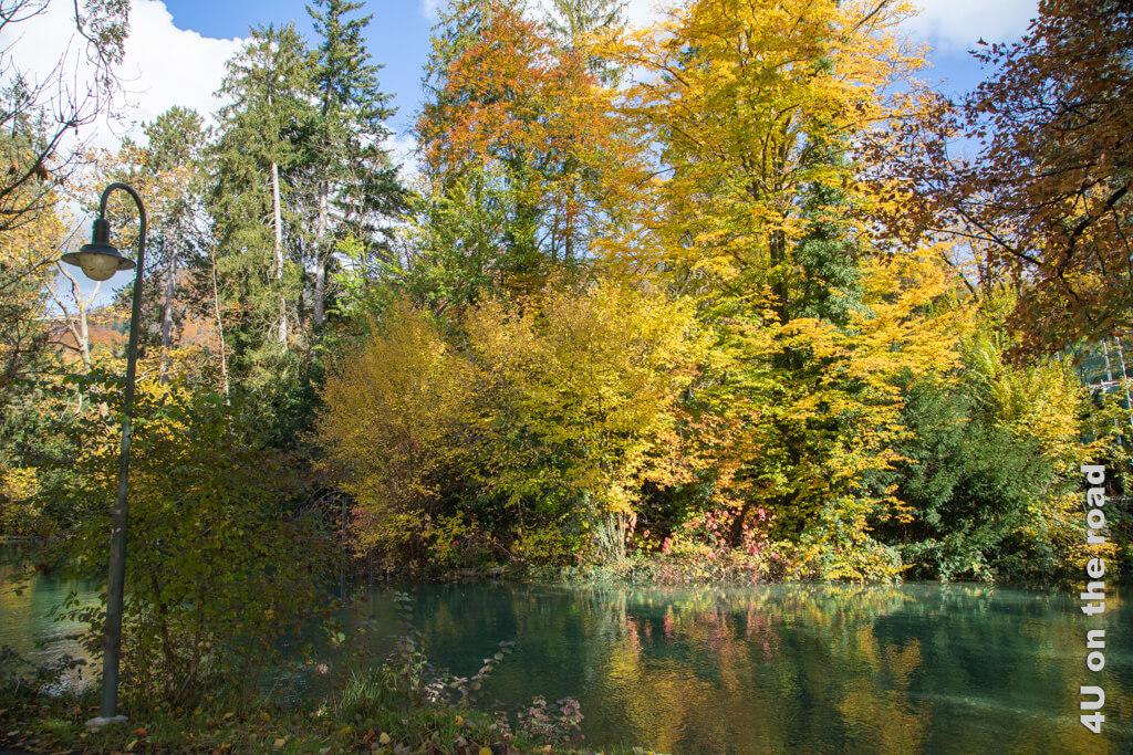 Herbstlich gefärbte Bäume machen den Weg entlang der Aare zu einem verträumten Ort.