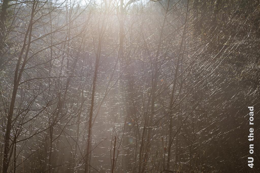 Tausend kleine Wassertröpfchen glänzen in der Sonne fast so als wären Silberfäden in die Äste gewebt.