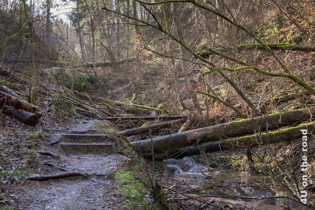 Selten ist uns heute der Anblick eines unaufgeräumten Waldes vergönnt.