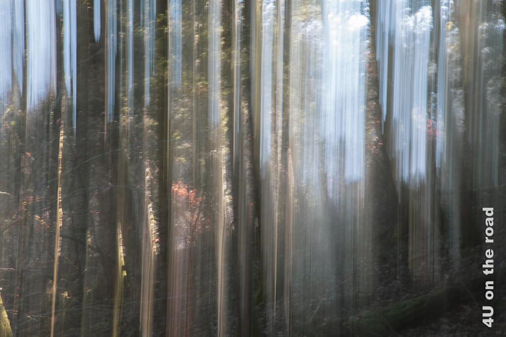 Malen mit der Kamera oder der Versuch die gebündelten Lichtstrahlen im Wald festzuhalten. Auf dem Weg zur Tüfels Chilen