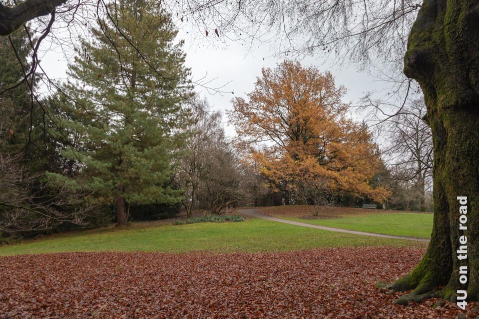 Selbst an einem trüben Wintertag ist der Rieterpark noch attraktiv - Museum Rietberg