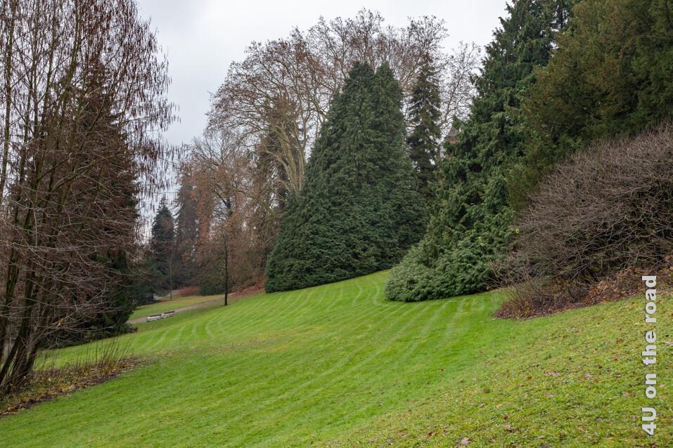 Ein alter Baumbestand prägt das Aussehen des Rieterparks.