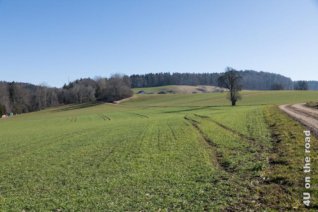 Über die Felder geht es nach Ober Langenhard