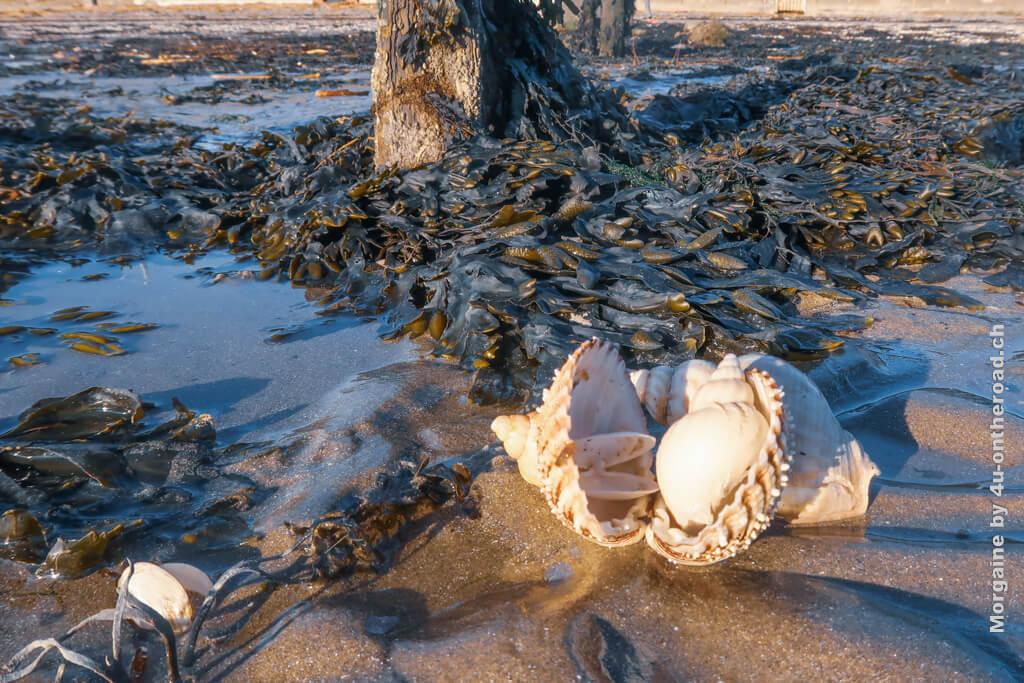 Ein Baum umgeben von Algen und Muscheln sieht man auch nicht alle Tage. Foto Challenge Meer