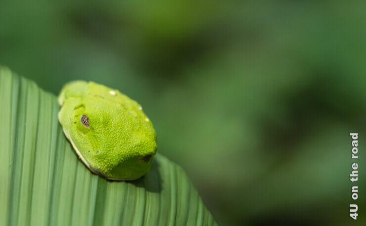 Feature Einreise Costa Rica