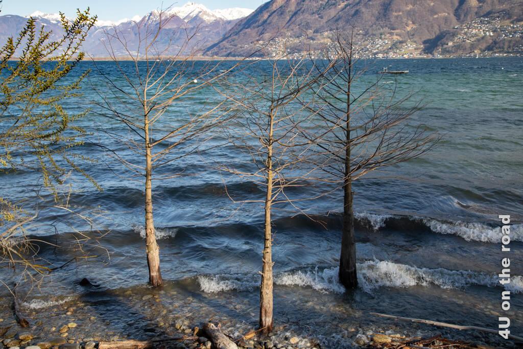 Mit den Wellen auf dem Lago Maggiore kommt richtig Urlaubsfeeling auf. Man könnte glauben, am Meer zu sein. - Kamelienpark Locarno