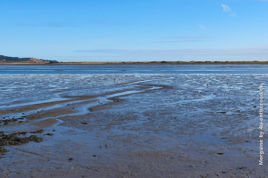 Die Vögel erkennt man nur ganz klein an der Wassergrenze. Es herrscht Ebbe. Foto Challenge Meer