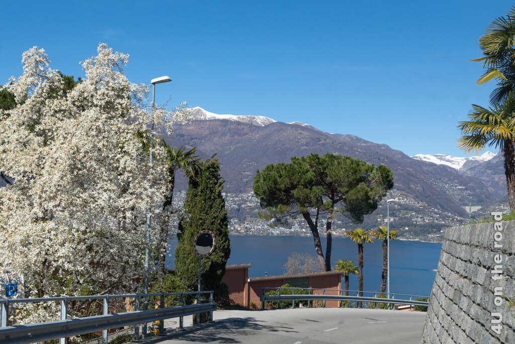 Südliches Flair oberhalb des Lago Maggiore und Schnee auf den Bergspitzen - traumhaft.