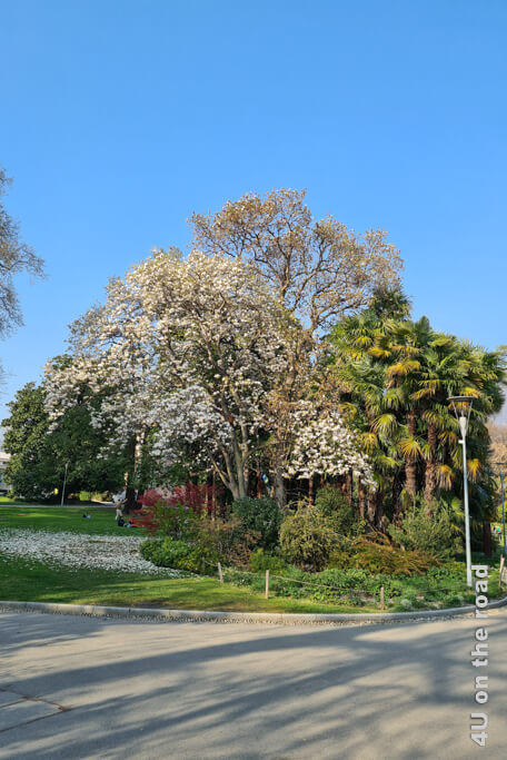 Blütenpracht schon gleich am Eingang des Parco Ciani.