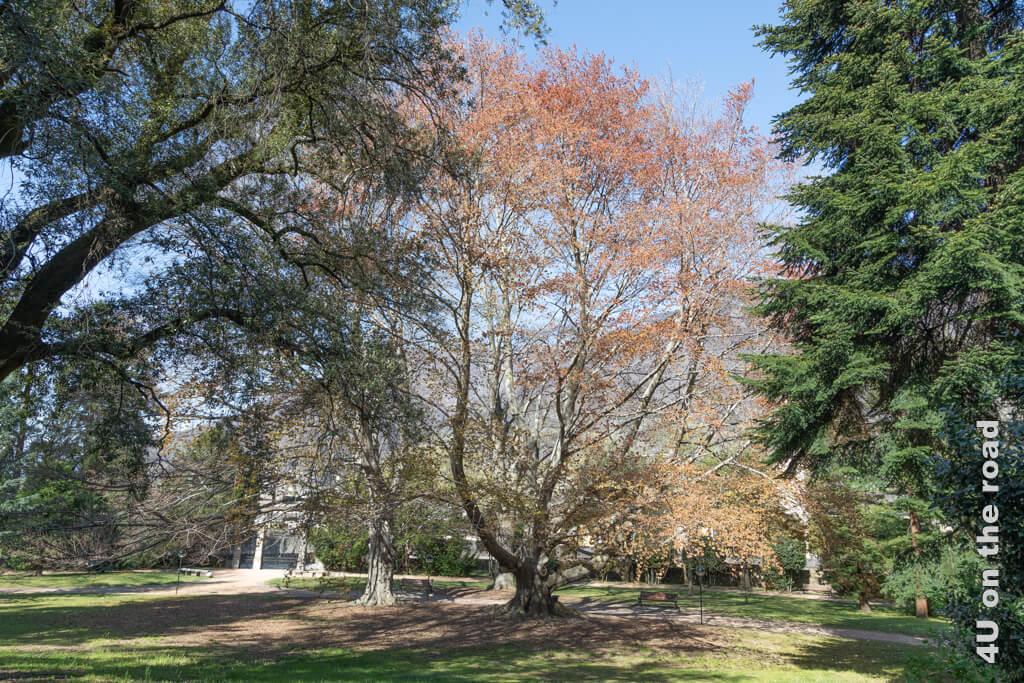 So ein Schattenplatz auf einer der Bänke unter den Bäumen ist im Sommer sicher ein schöner Ort für eine Pause. - Englischer Landschaftsgarten Villa dei Cedri