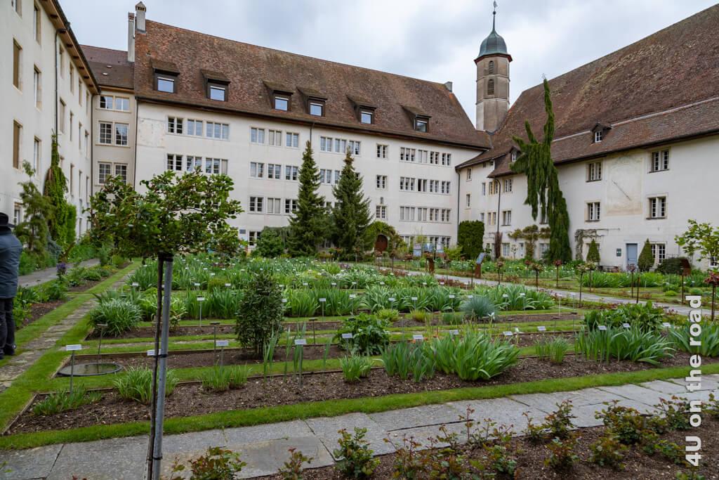 Geschützt von den Mauern des Jesuitenkollegs wachsen Iris, Rosen und viele weitere Pflanzen im Botanischen Garten von Porrentruy.