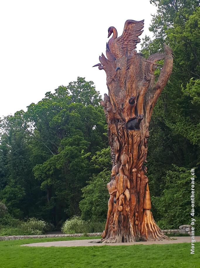 Dieser Baum steht urz vor dem Übergang zu Bull Island.