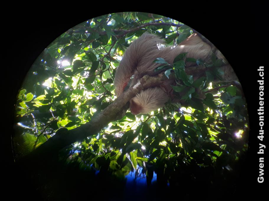 Faultier durch das Teleskop fotografiert - Ausflug zum Manuel Antonia Nationalpark