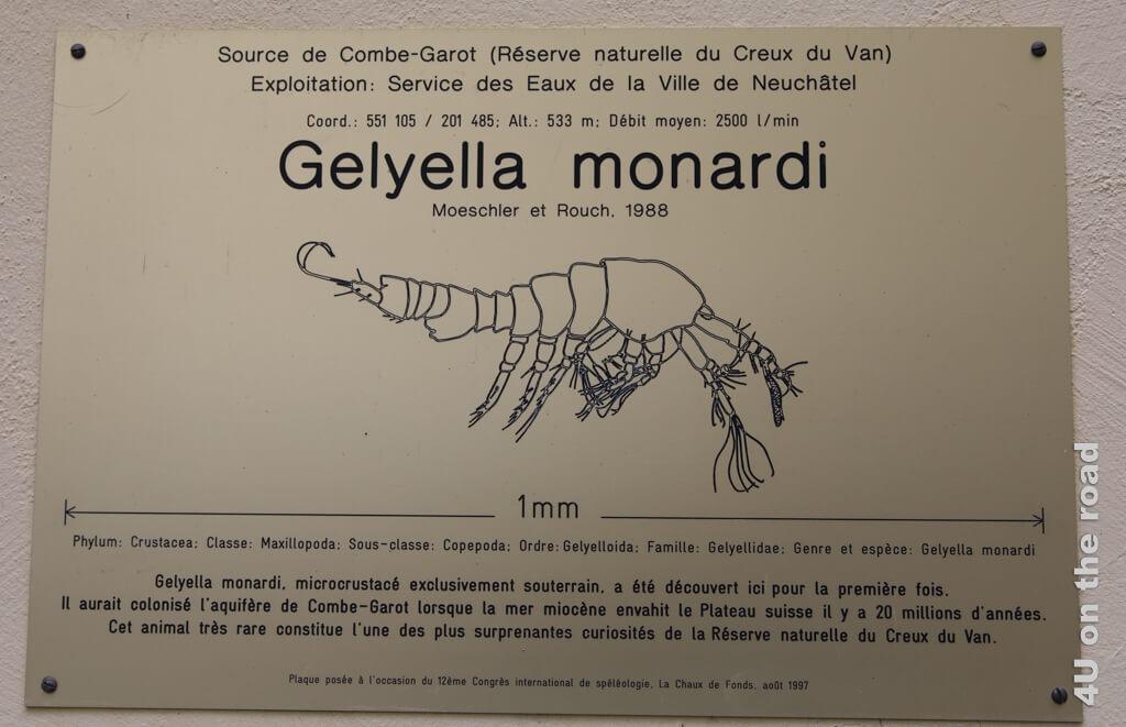 Gelyella monardi - Ruderfusskrebs