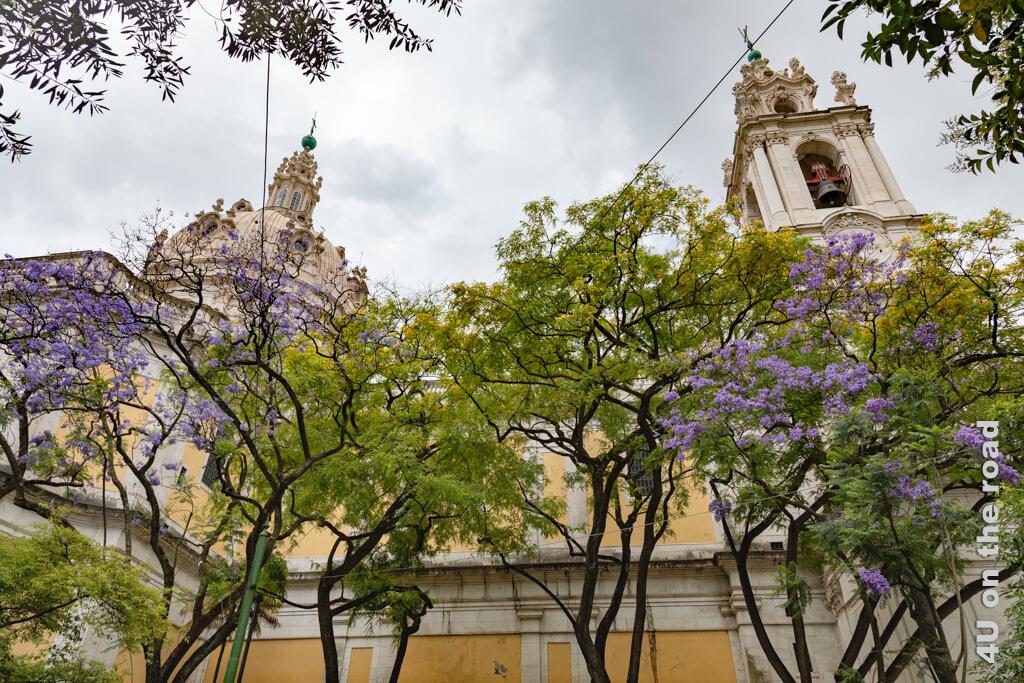 Neben der Basilica da Estrela befindet sich auch ein kleiner Park mit blühenden Jacaranda Bäumen.