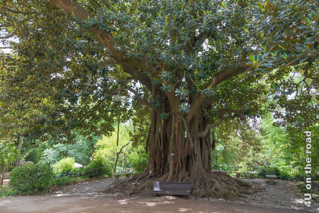 Einer von vielen schattigen Plätzen im Jardim da Estrela