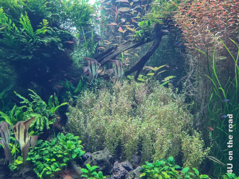 Die meisten Fische entdecken wir in den dschungelartigen Wasserlandschaften.